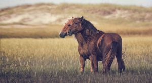 Jared Loyd Equine Imagery.jpg